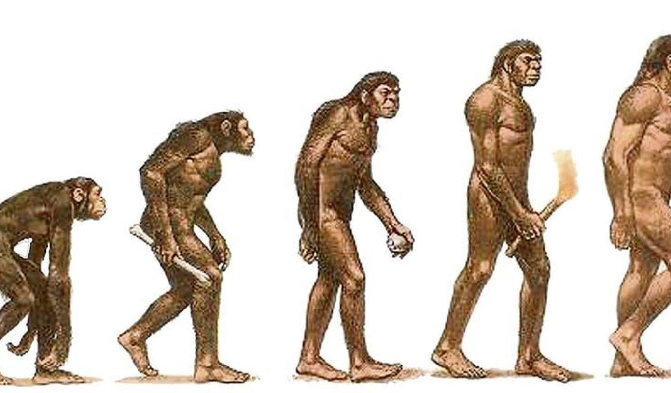 Resultado de imagen de homo sapiens