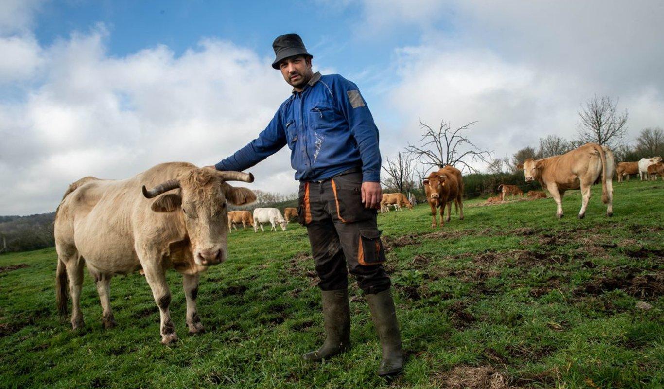Marcos Rodríguez, con sus vacas, en Reboredo. (Foto: Óscar Pinal)