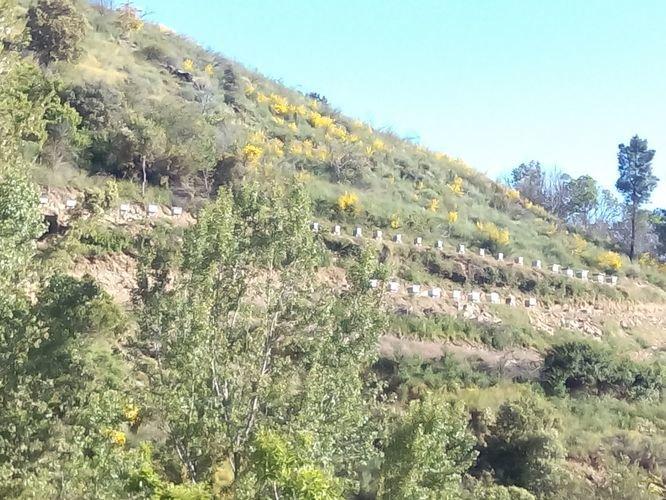 Colmenar ubicado en la comarca de Valdeorras.