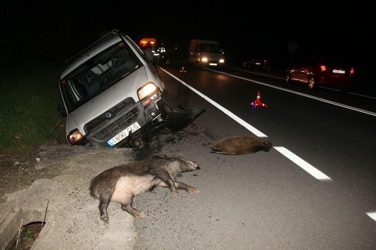 Resultado de imagen de accidentes con animales en la carretera
