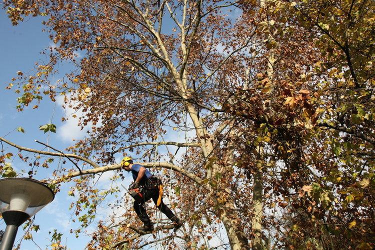El concello aplica una poda m s saludable en el pos o for Jardin del posio ourense
