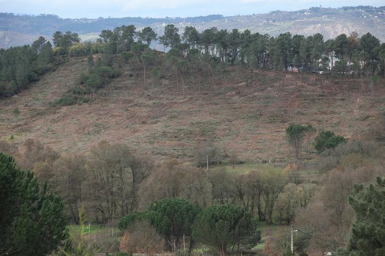 Tala masiva de árboles en las proximidades de Seixalbo