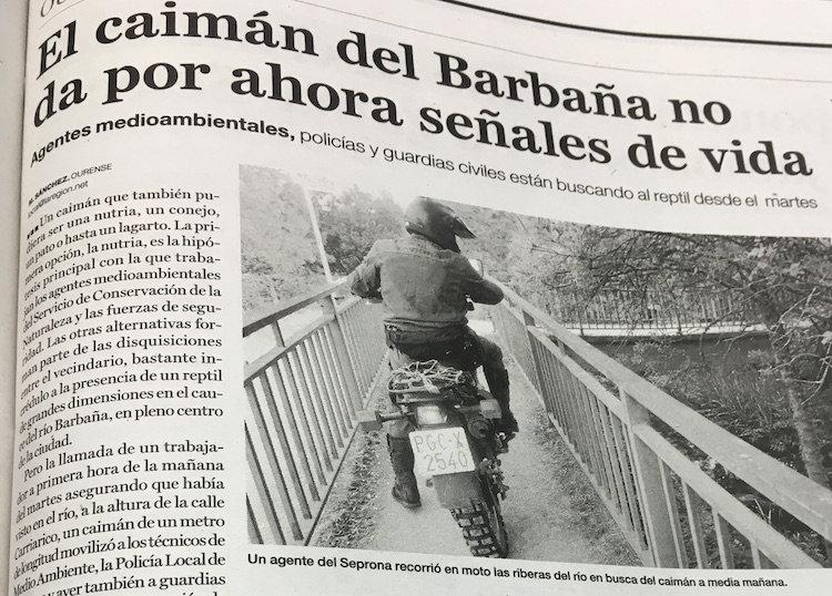 La búsqueda del caimán del Barbaña.