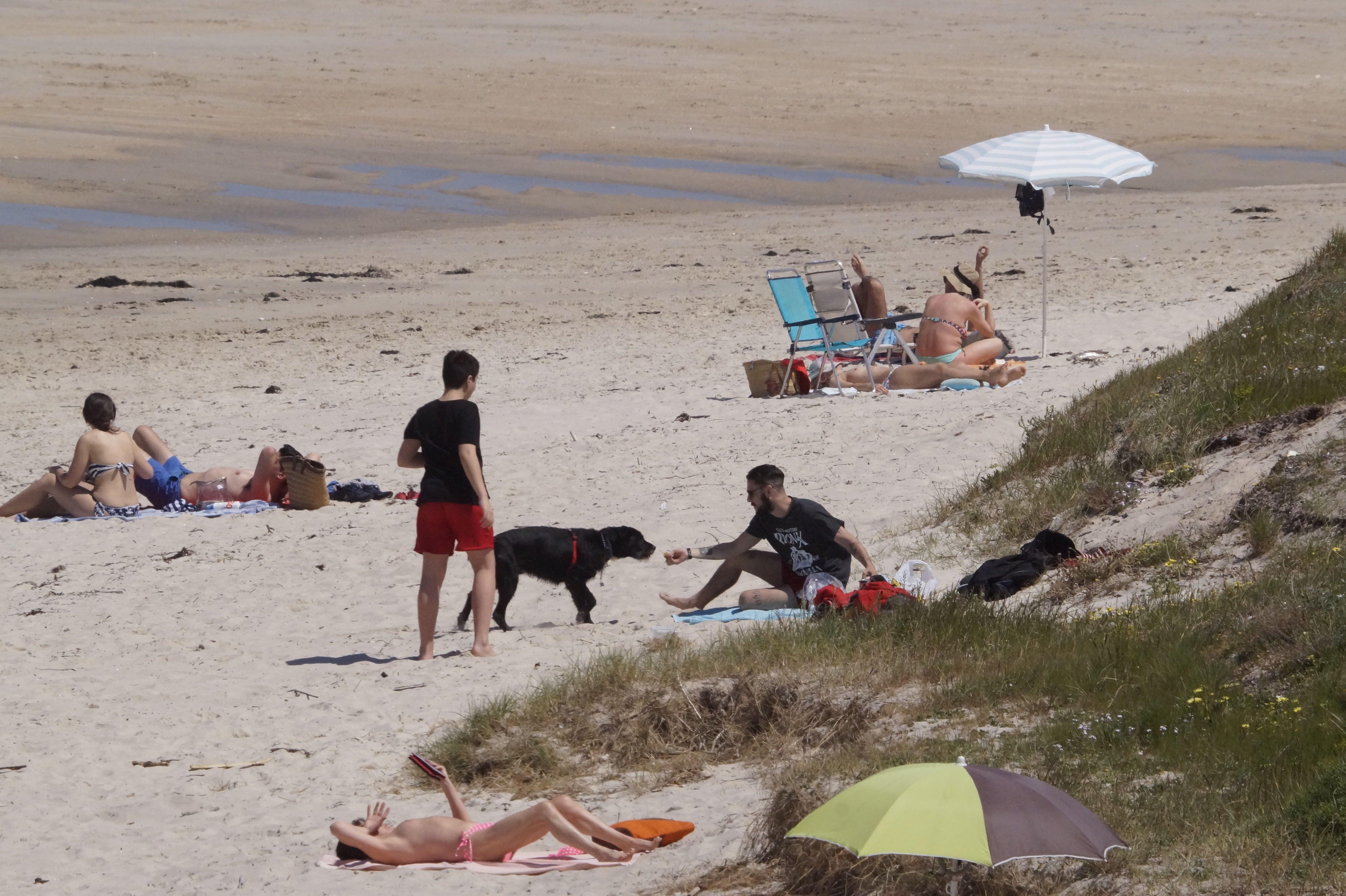 Cómo pasar un verano de perros