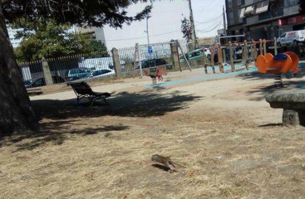 Carrera de ratas en el jard n del pos o de los lectores for Ahuyentar ratas jardin