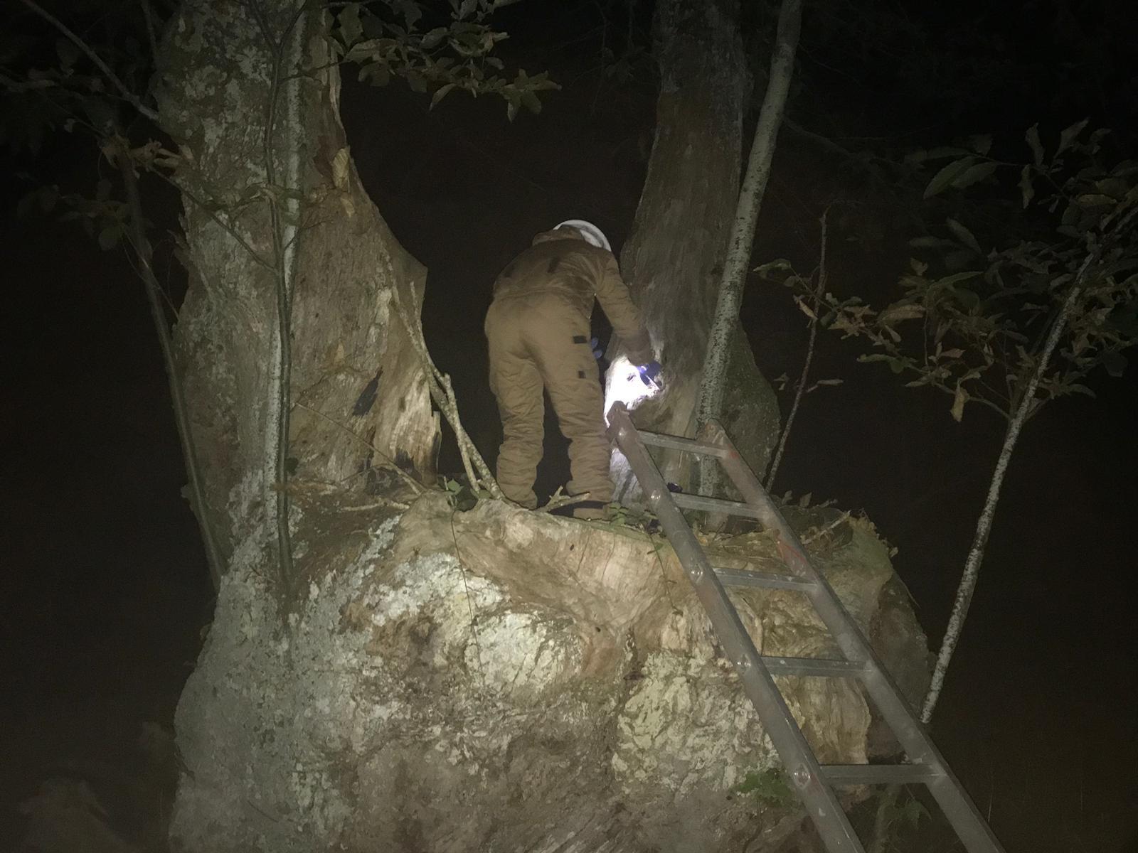 Los voluntarios de Porqueira quitan dos nidos de avispa velutina