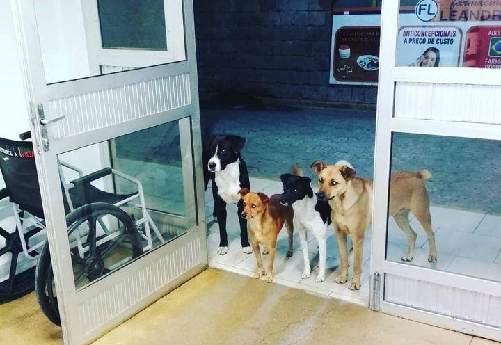 Los animales, esperando por su dueño a la puerta del centro hospitalario.